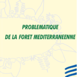 Problematic of the Mediterranean forest